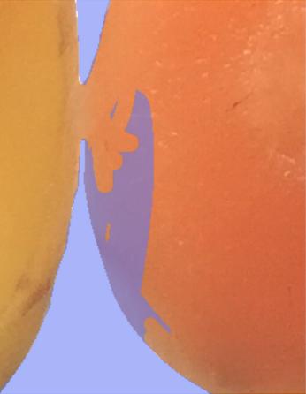 Artist Anais Hazo fermentation drawing carrots